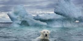 'Petrolhead' Michael R. Roskam schaart zich achter de klimaatactivisten