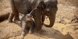 Kai-Mook helpt soortgenoten in India