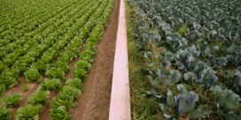 Kiezen tussen schone waterlopen of maximale landbouwopbrengst