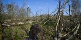 'In Vlaanderen is er amper bos bijgekomen sinds 2000'