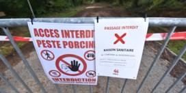 Leuvense research ingezet tegen varkenspest