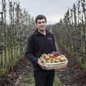 Fruitteler geeft peren gratis weg