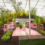 Ikea kiest voor duurzaamheid en Solange Knowles