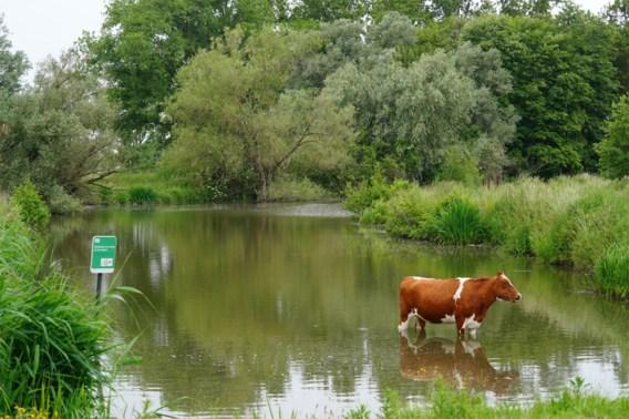 Gents natuurgebied rooit 700 'waardeloze' bomen om zeldzame watervogels te lokken