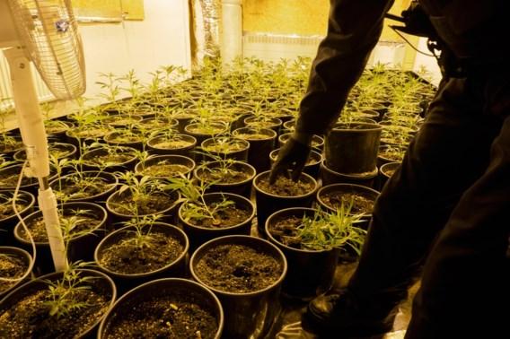 'Hype rond medicinale cannabis is van de pot gerukt'