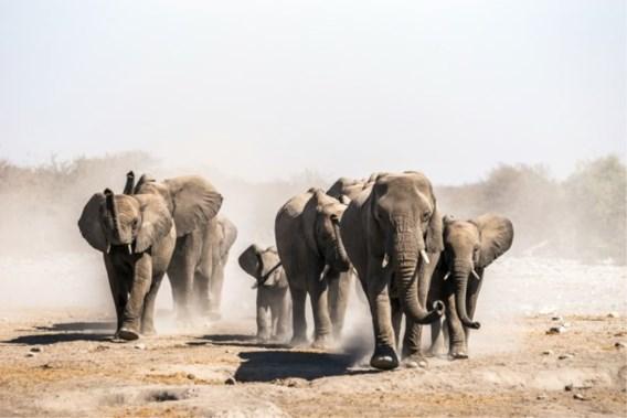 Namibië wordt door 'ergste droogte in meer dan 90 jaar' gedwongen 1.000 wilde dieren te veilen