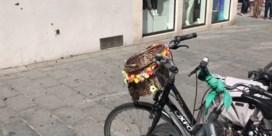 Duizenden bijen nestelen zich in fietstassen in Kortrijk