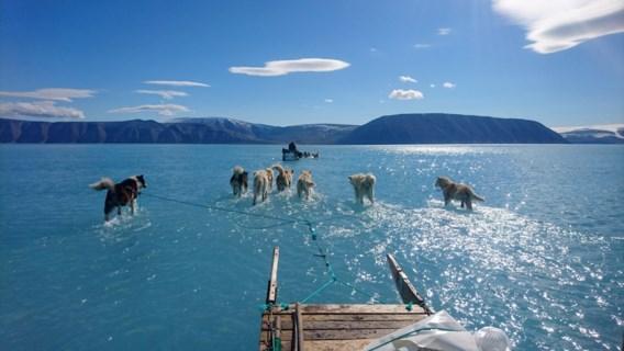 Wanneer sledehonden op Groenland door smeltwater stappen