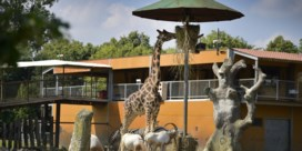 Olmense Zoo heropend als 'Pakawi Park'
