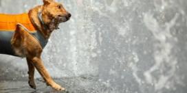 Deze tips helpen dieren tegen de hitte