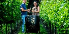 Pinot Noir op zandbodem in Beringen