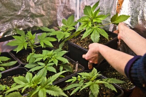 Leden van Trekt Uw Plant in beroep tegen celstraffen