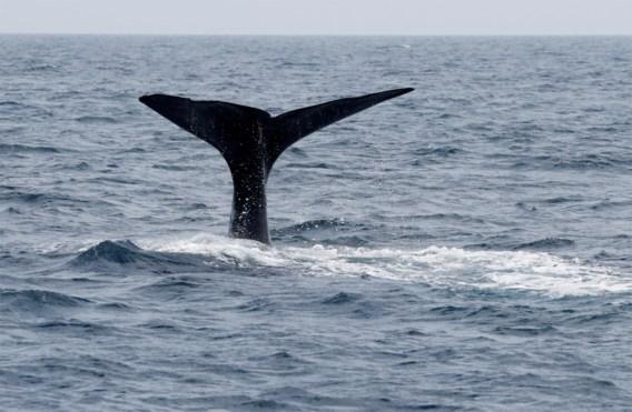 Schotland lanceert nieuwe trail om walvissen en dolfijnen te spotten