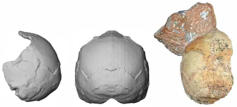 Bewijst stuk schedel dat homo sapiens veel eerder naar Europa trok dan gedacht?