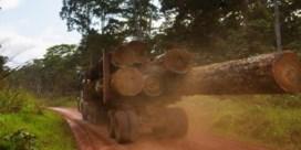 Antwerpen draai'schijf illegale houthandel