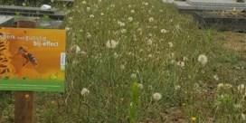 Bloemenweide of onverzorgde onkruidzone?