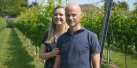 Wijngoed Fortune bottelt eerste oogst
