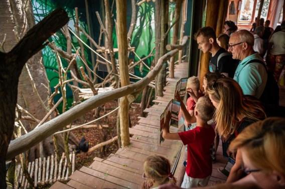 Bonobo's worden verwend in Planckendael