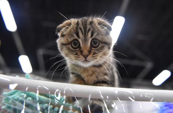 'Opvallende stijging van achtergelaten kittens'