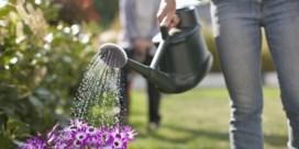 ZOMERCHECK. 'Is het zinvol om bij hitte planten water te geven?'