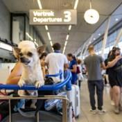 Opnieuw honderdtal vluchten op Schiphol geannuleerd
