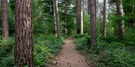Vagevuurbos mag toch niet gekapt worden, zegt Raad van State