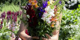 Hoe maken we van bloemen een echt cadeau?