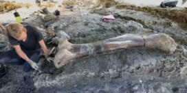 Gigantisch dinosaurusbot gevonden in Frankrijk