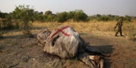 Toelating olifantenjacht verdeelt Botswana: 'Als je de boeren negeert, ben je nog veel verder van huis'