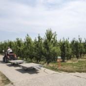 Grote Stoute Rus geeft perenboeren genadeslag