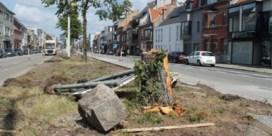 Eeklose bomenzager gevat: man vernielde zes bomen 'om kettingzaag te testen'