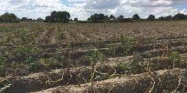 Boerensyndicaat: 'Problemen voor landbouwers niet voorbij, snel maatregelen nodig'