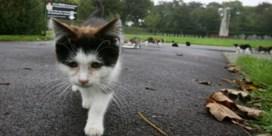 Tien dagen cel voor het voeden van straatkatten
