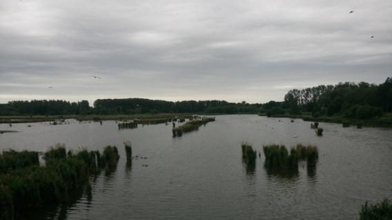 Grootste binnenmeer van Vlaanderen wordt leeggepompt