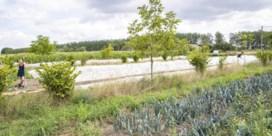 De bomen in het veld doen het graan mee groeien