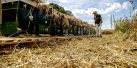 Nederland wil af van Vlaamse 'honingcowboys'