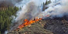 Zware bosbrand in bergen van Gran Canaria