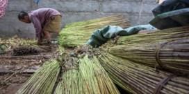 Microkrediet duwt armsten in schulden