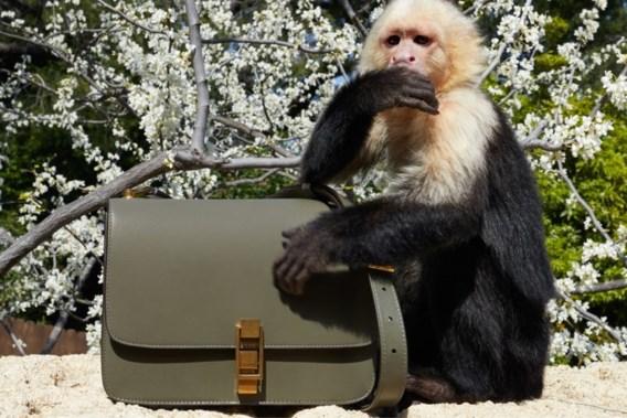 Belgische ontwerper op de vingers getikt voor opvoeren aapje