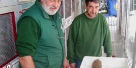 Egels en merels hebben te lijden onder de hitte en de droogte