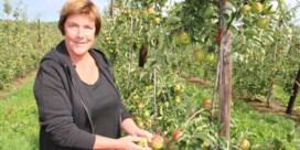 Warme zomer treft appelboer: 'Ruim helft van oogst verloren'