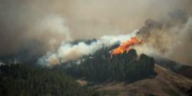 Bosbrand op Gran Canaria 'niet onder controle', 9.000 mensen geëvacueerd