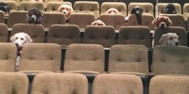 Honden kijken musical als training: 'Ze waren heel braaf'
