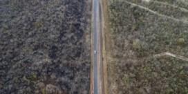 Dreigt 'dieback' voor Amazonewoud? 'Boomsoorten gaan kapot, ook in België'