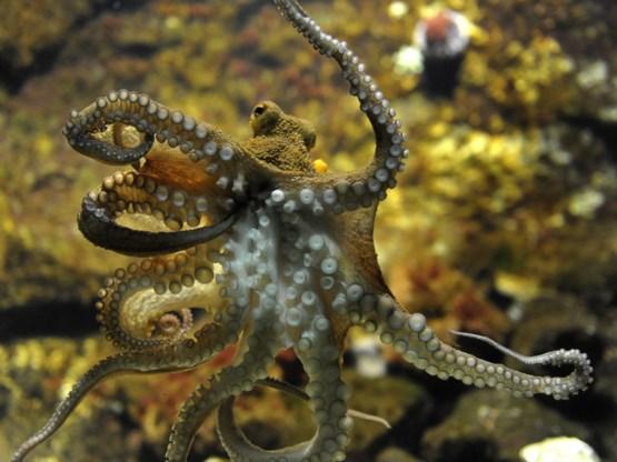 TV-tips. Neem eens een octopus als huisdier