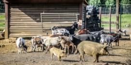 Al bijna 2.000 dieren in beslag genomen