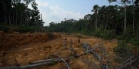 Amazonestammen vechten tegen bosbranden om te overleven