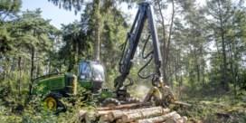 'Letterzetter betekent einde van fijnspar in Limburg