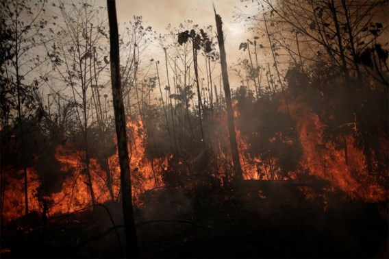 Bolsonaro belooft 'nultolerantie' voor brandstichters Amazonewoud