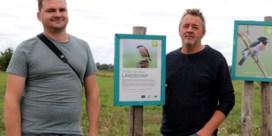 Uiterst zeldzame vogel broedt in Webbekomsbroek